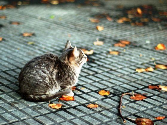 les temp ratures diminuent 25 photos de chats qui aiment l 39 automne page 2 wamiz. Black Bedroom Furniture Sets. Home Design Ideas