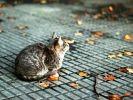 chat boule automne