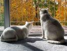chats blancs photo