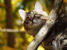 chat arbre automne