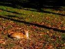 chat roux feuilles