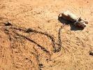 chien maltraité, combat de chiens