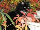 chat feuilles automne photo