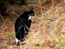 chat noir photo automne