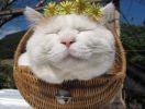 Shironeko, le chat zen