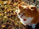 chat jardin soleil