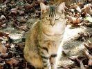 chat feuilles mortes photo