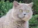 Chat Vanille Wamiz