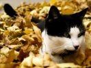 chat dort feuilles mortes