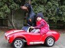 un petite fille et son dobermann