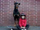 une petite fille et son dobermann