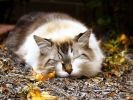 chat sieste bois
