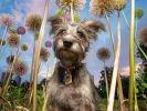 Photo de chien et fleurs géantes