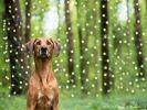 Photo chien forêt