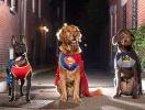 photo chiens super héros