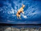 Photo chien saut
