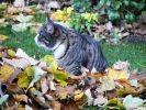 chat feuilles herbier