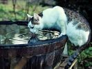 chat campagne eau