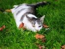 chat herbe automne
