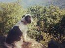 Shih tzu, chien abandonné