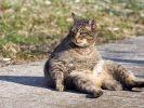 chat presque photogénique