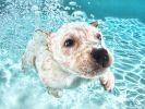 sauvetage chien errant