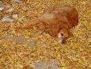 photo chien automne