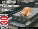 adopter chien maltraité
