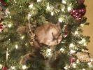 chat sapin de noël