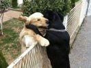 chien câlin