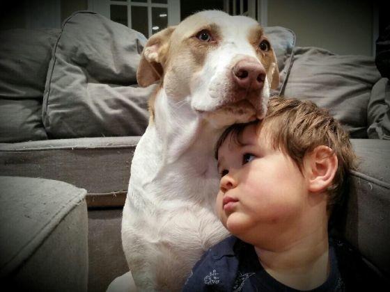 chien bébé