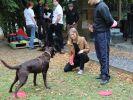 animaux de la 8 dog frisbee