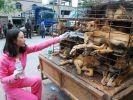 chiens chine maltraitance