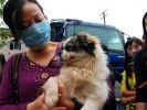 sauvetage chiens chine restaurant