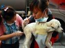 soins chiens chine maltraitance