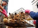 sauvetages chiens chine