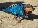 chien deguisement dinosaure