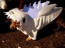 halloween chien deguisement requin