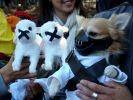 chien deguisement hannibal lecter halloween