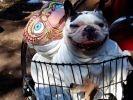 chien déguisement extra terrestre
