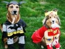 chiens costumes batman et wonderwoman
