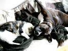 chien boxer chat
