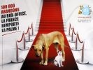 chien chat tapis rouge