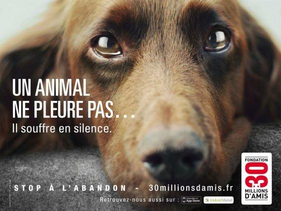 abandon animaux