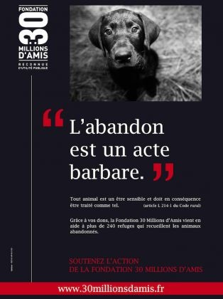 abandon animaux
