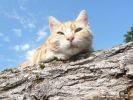 photo de chat manouche