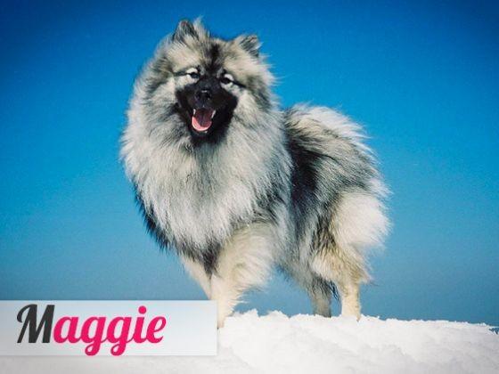 Chien Maggie
