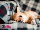 Chien Molly