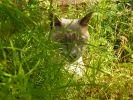 photo de chat roméo
