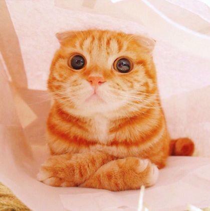 Insolite : oui, le Chat Potté de Skrek existe pour de vrai et vous allez l'adorer !